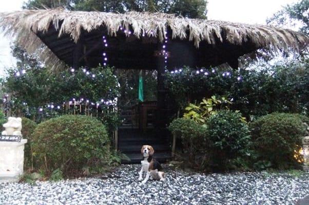 愛犬、四季の蔵の庭にて