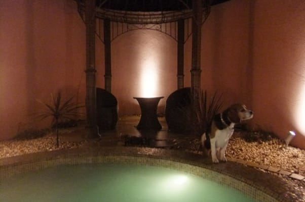 愛犬、貸し切り温泉風呂にて