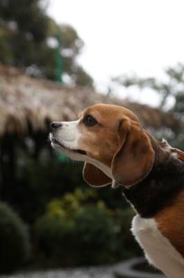 四季の蔵にてプロ写真家による愛犬撮影会