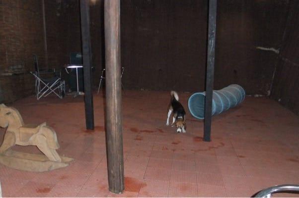 愛犬、四季の蔵森のドッグランにて
