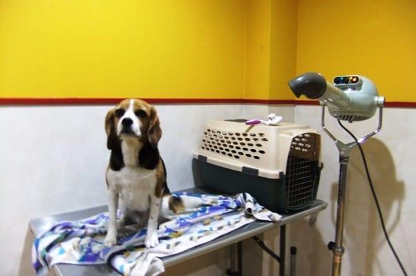 愛犬、四季の蔵トリミング室にて