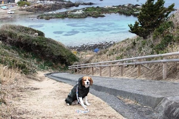 愛犬、爪木崎散策路にて