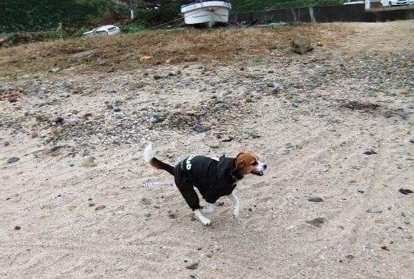 愛犬、爪木崎の海岸にて