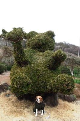 愛犬、爪木崎公園にて
