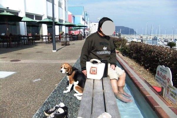 愛犬、伊東道の駅マリンタウンの足湯にて
