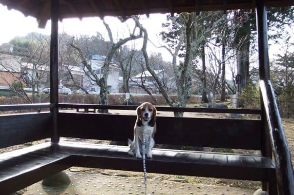 愛犬、赤蛙の公園にて
