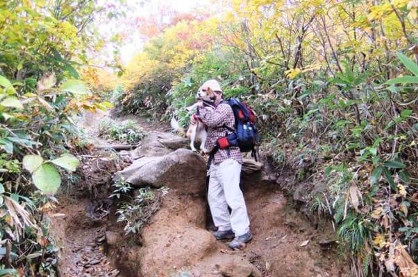 谷川岳登山道で抱っこされる愛犬