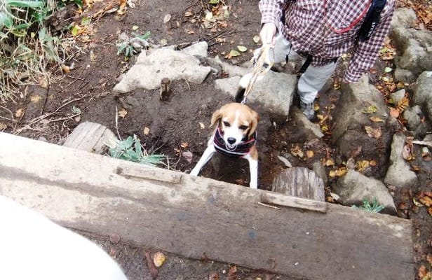 谷川岳登山道での愛犬