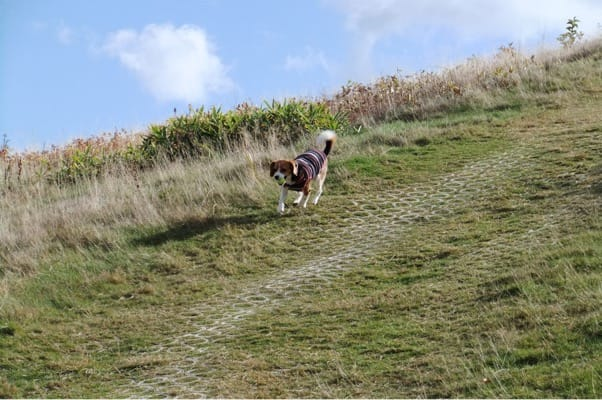 天神平を駆ける愛犬