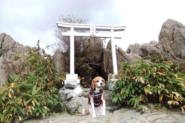 天神峠神社での愛犬