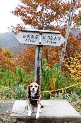 谷川岳登山口での愛犬
