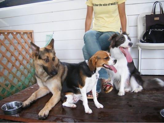 旧DOG GARDEN RESORTで休憩する犬3頭