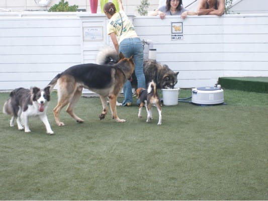 旧DOG GARDEN RESORTで遊ぶ犬たち