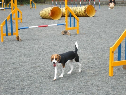 寄ふれあいドッグラン(旧名)を歩くミックス犬