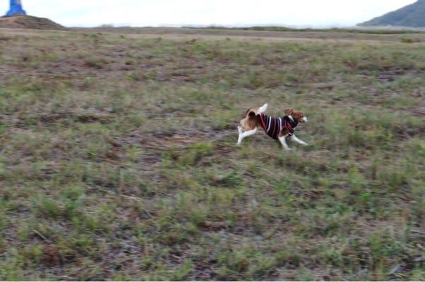 岩原スキー場を駆ける愛犬