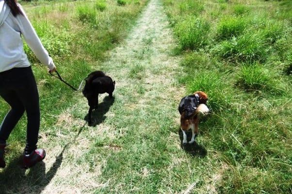 サンメドウズ散策路を歩く犬友と愛犬