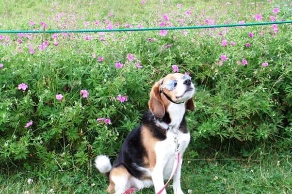 愛犬、サンメドウズにて