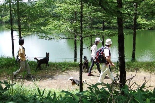 サンメドウズ散策路を歩く甲斐犬2頭とミック犬