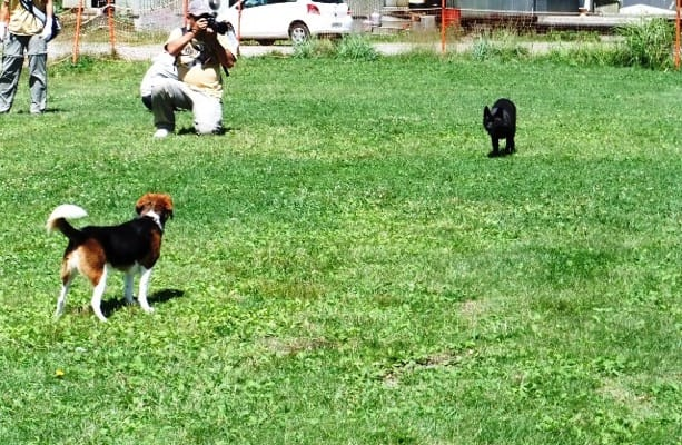 犬友と愛犬、サンメドウズドッグランにて