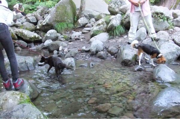 吐竜の滝て涼をとる犬友と愛犬