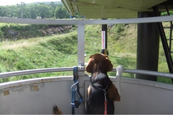 サンメドウズのゴンドラ型リフトに乗るミックス犬
