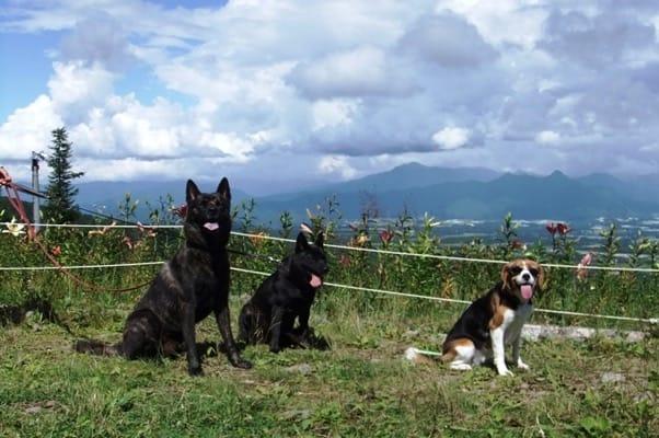 犬友と愛犬、サンメドウズにて
