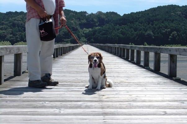 蓬莱橋の上に座るミックス犬