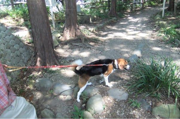 蓬莱橋対岸での愛犬