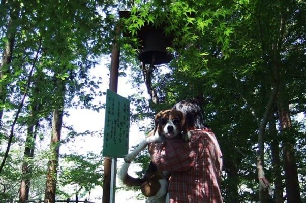 蓬莱橋愛和の鐘での愛犬