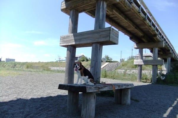 愛犬、蓬莱橋はしげたにて