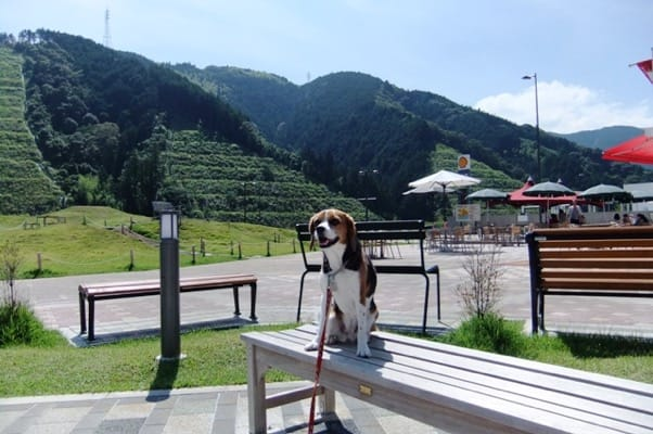 静岡SAベンチでの愛犬
