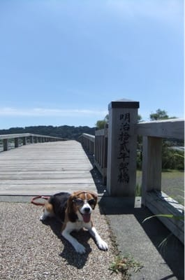 蓬莱橋での愛犬