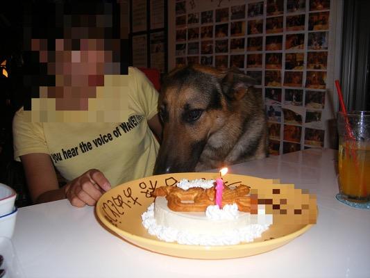 犬用ケーキとシェパード