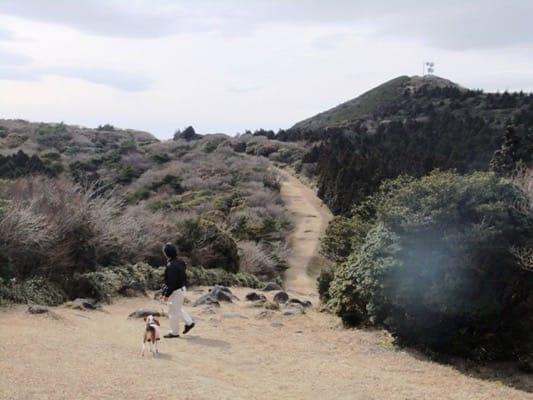 金冠山登山道を歩くミックス犬