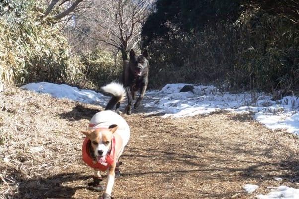 愛犬達、金冠山登山道にて