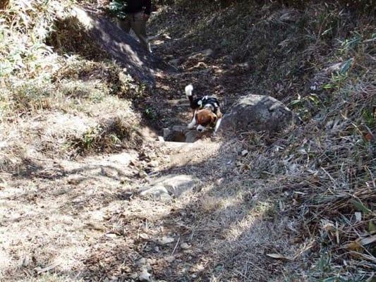 金冠山登山道を登るミックス犬