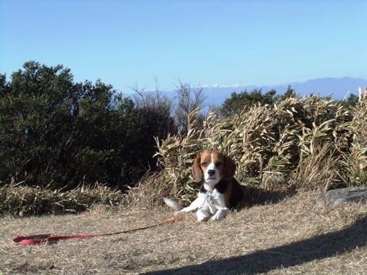 金冠山頂上で寝そべるミックス犬