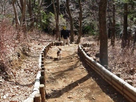 だるま山高原レストハウス前の散策路を歩くミック犬の後ろ姿