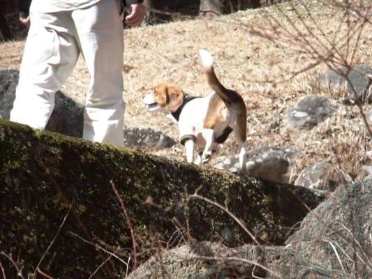 だるま山高原レストハウス前の散策路を歩くミックス犬
