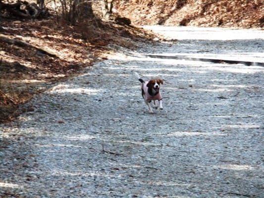だるま山高原レストハウス前の散策路を走る愛犬