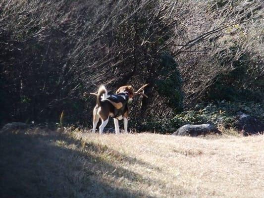 愛犬、金冠山登山道にて