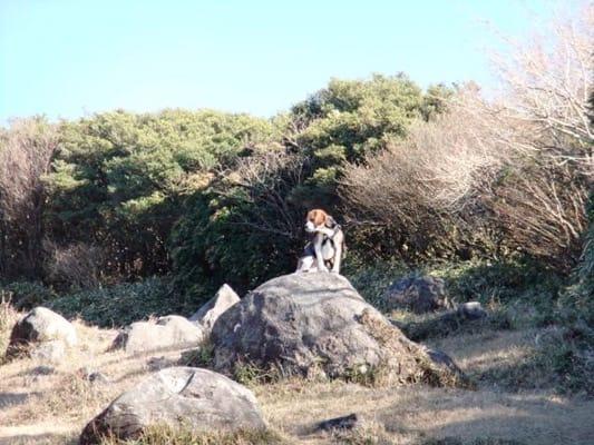金冠山登山道の大きな岩の上に座ったミックス犬