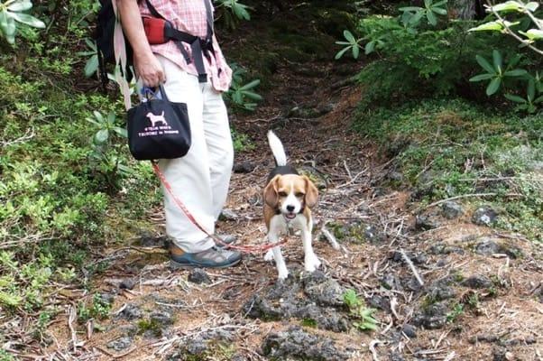 富士山登山道を歩くミックス犬