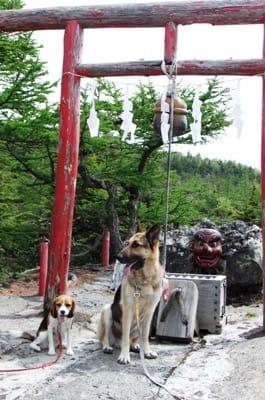 奥庭自然園で並んで座るシェパードとミックス犬