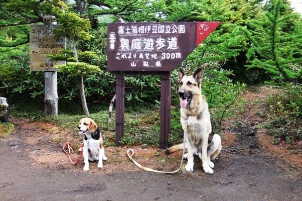 奥庭自然園の道標前で並んで座るシェパードとミックス犬