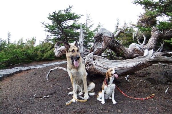奥庭自然園の倒木のそばに並んで座るシェパードとミックス犬