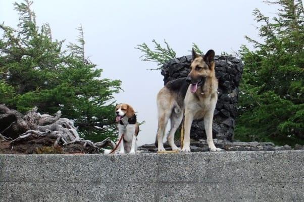 奥庭自然園のシェパードとミックス犬