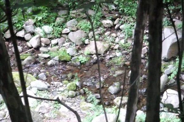 中止の滝ハイキングコースを流れる小川