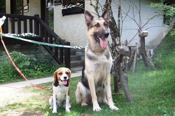 メリーゴーランドカフェで座るシェパードとミックス犬
