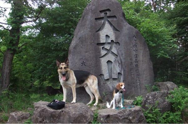 天女山でシェパードとミックス犬